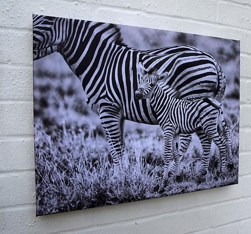 "Zebra Canvas 20"" X 16"""