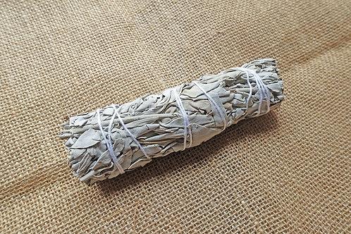 白鼠尾草(中)