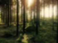 lightforest.jpg