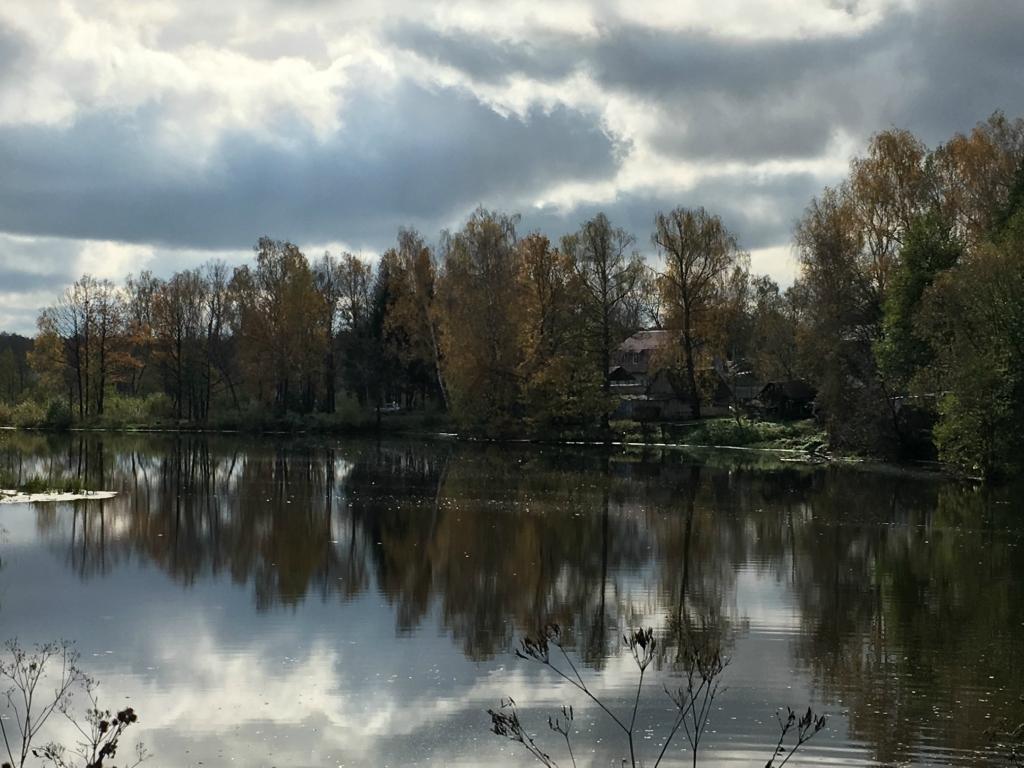 Тенистые места на берегу пруда