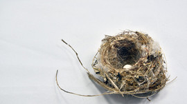 "Just what is the ""Empty Nest"" Syndrome?"