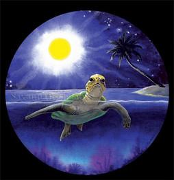 Sea Turtle in Half Moon Bay