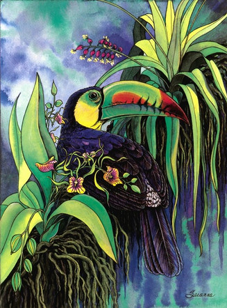 Keel-billed Toucan and the Black Orchid