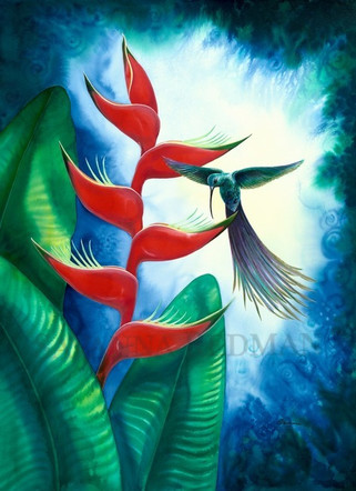 Heliconia Dreaming
