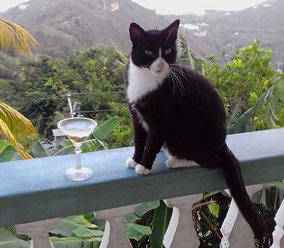 My Cat Simon - Captain of my Fan Club