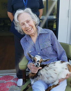Retirement-community-goat-visits