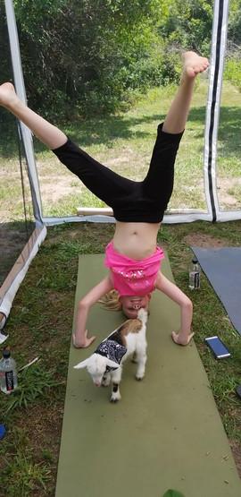 Goat Yoga Head Stand