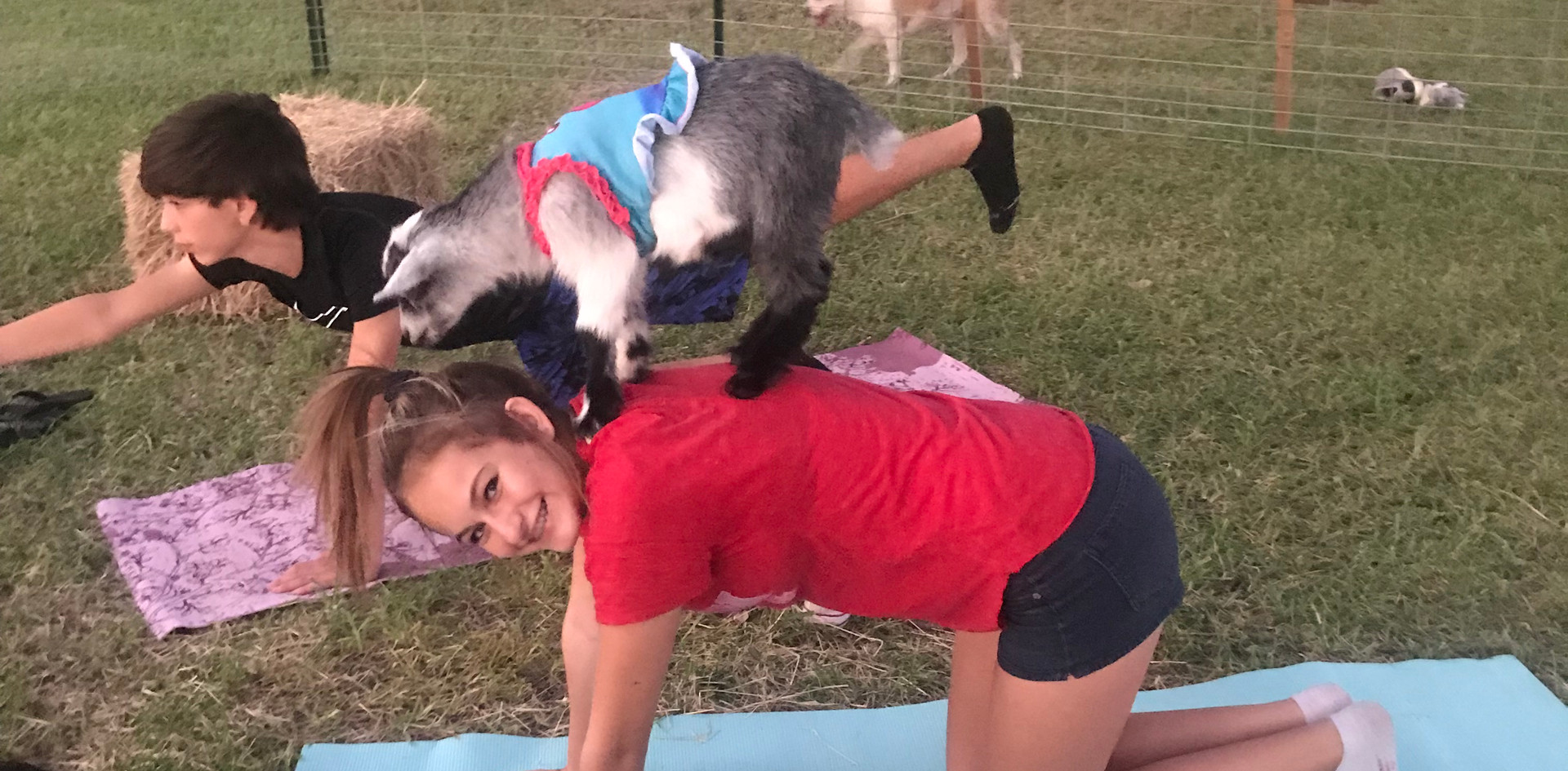 Goat Yoga on Girls back