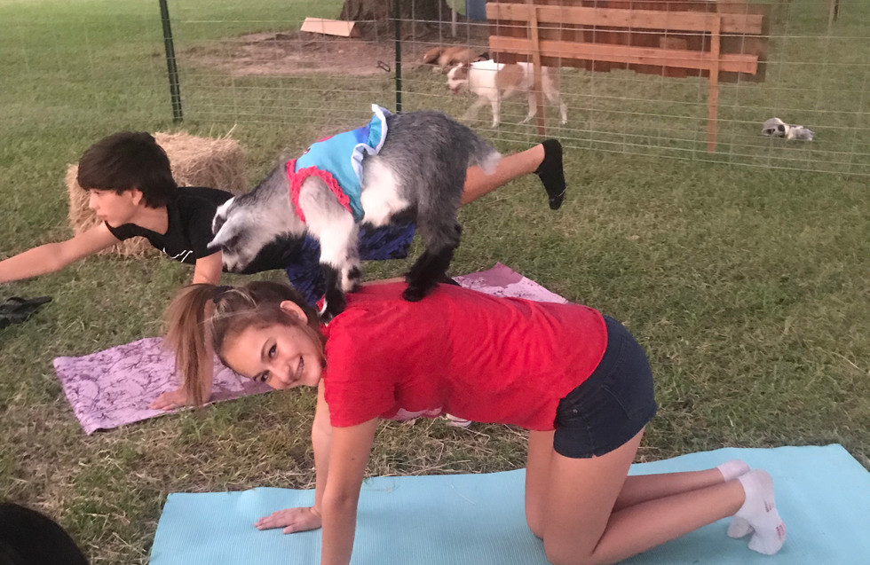 Goat Yoga on Girls back