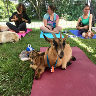 Baby and Momma Goat Yoga