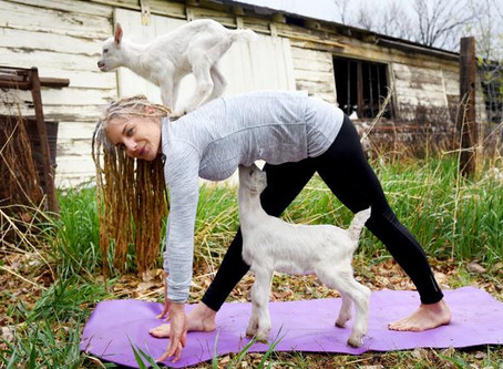 So why Goaty Yoga???