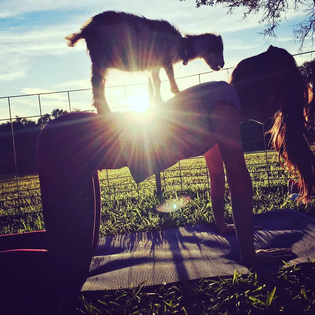 Goat Yoga Sunset.jpg