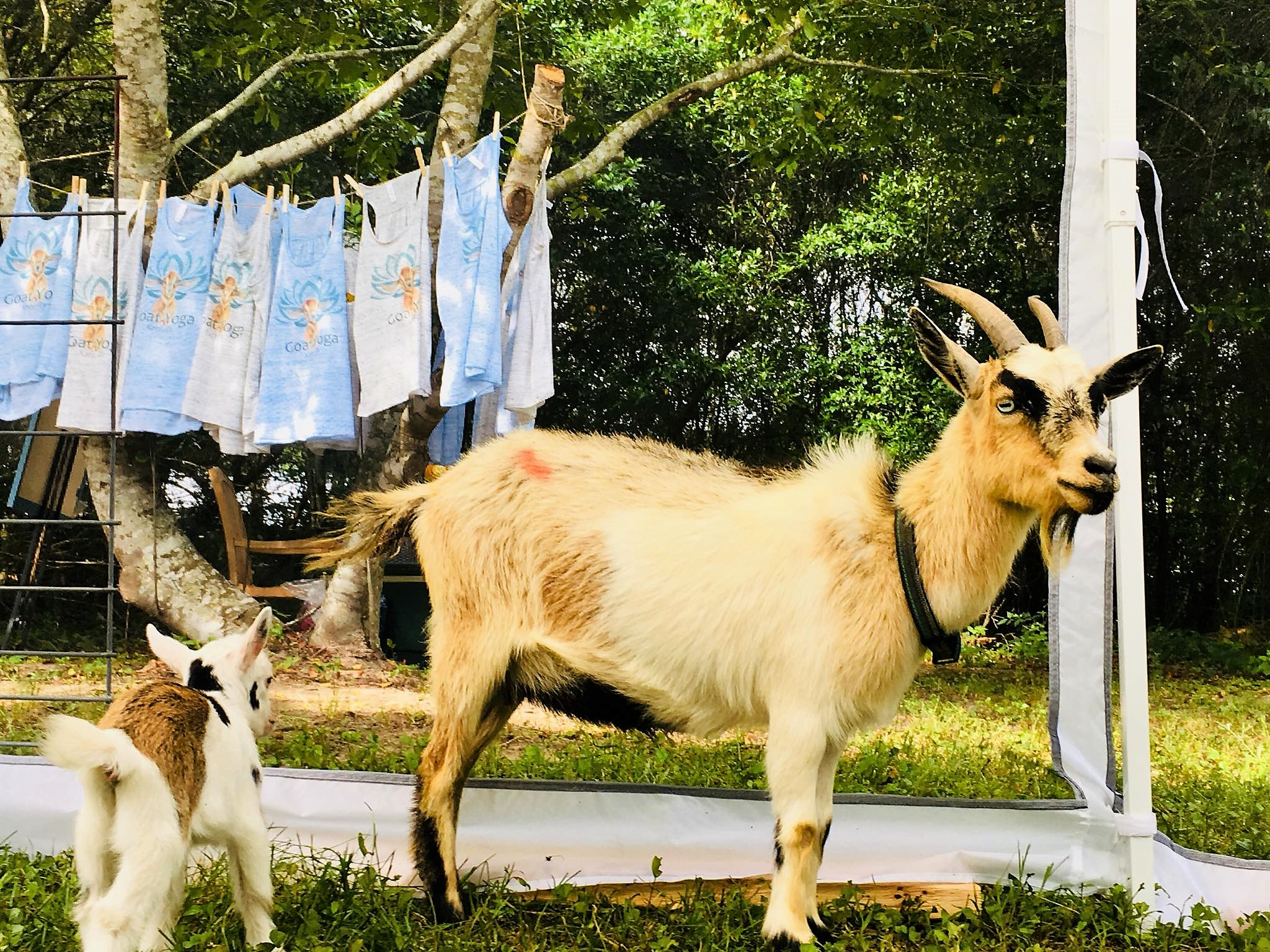 Shop Goat Gear