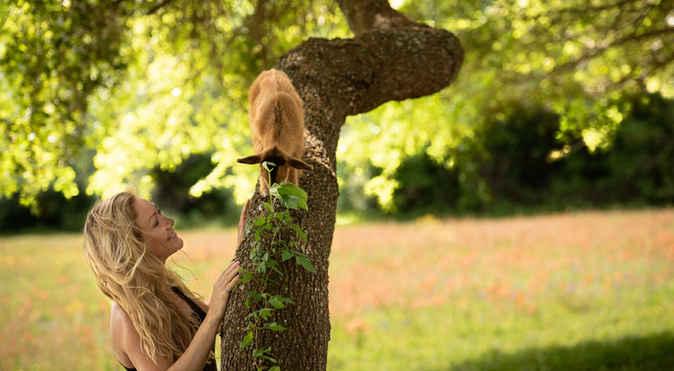 Goat Yoga Houston in Tree