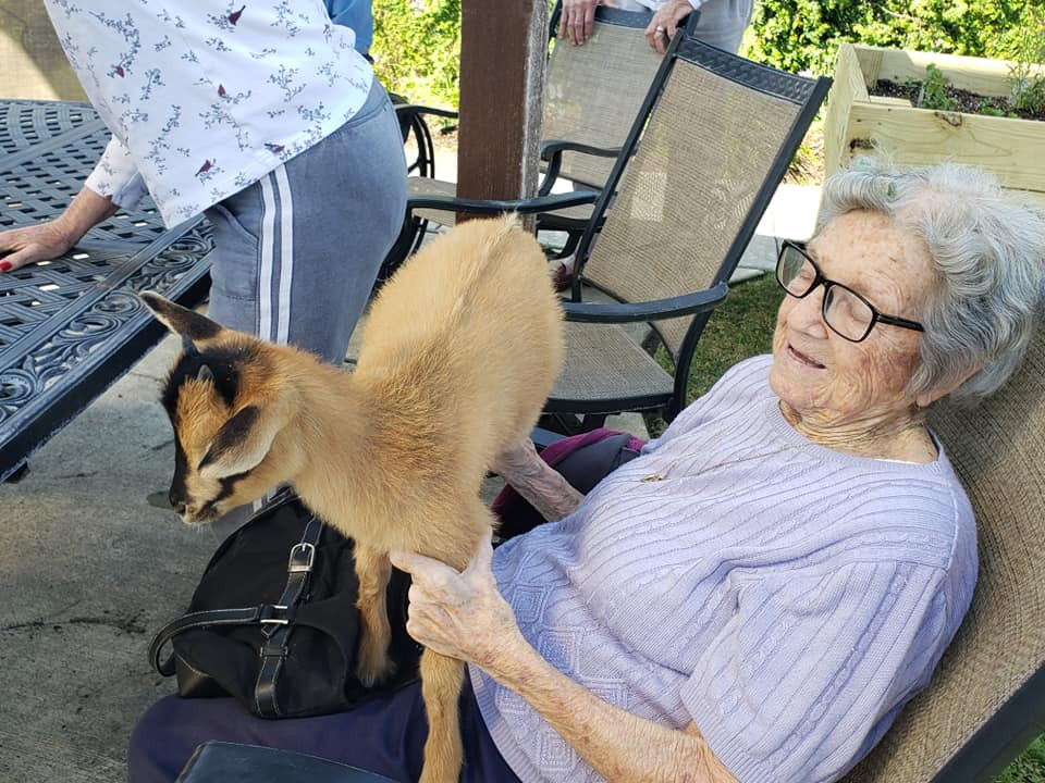 Goat Therapy visit at local Katy Retirement Community.  Lady with baby goat.