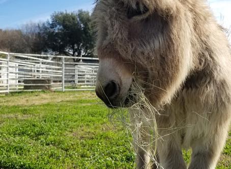 ROSE Therapeutic Farm & Goat Yoga