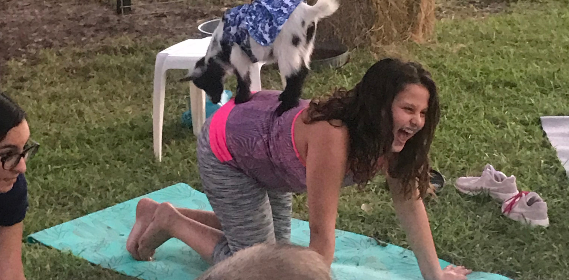 Birthday Party Goat Yoga