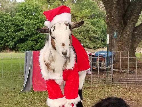 Goat Lovers Pass - $25 per Class