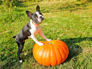 We Love Your Pets! Halloween Pet Safety