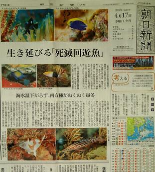 朝日新聞夕刊(4.17)