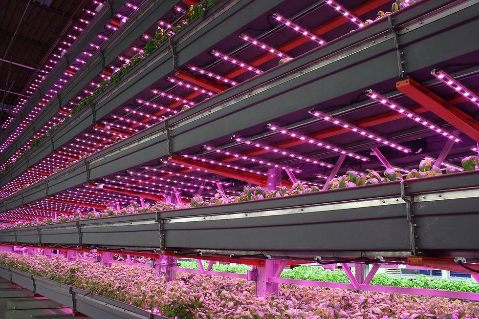 Illumitex Farmed Here.jpg