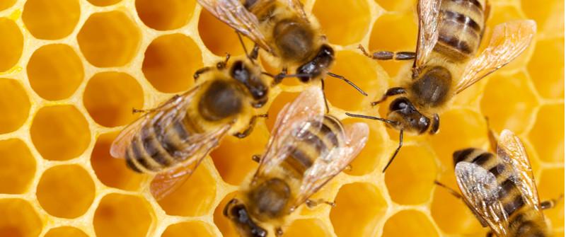 bees honeycomb prof magazine