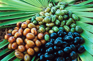saw-palmetto-extract-500x500.png