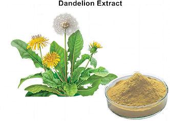 pl17882529-4_flavonoids_organic_dandelio