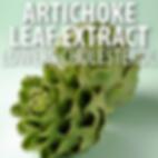 artichoke-leaf-ex-.png