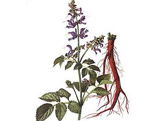 Salvia-miltiorrhiza-Powder-Extract.jpg