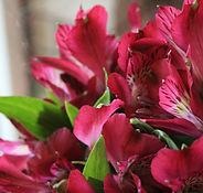 Alstroemeria Lilies