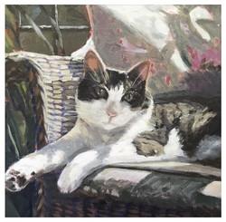 Kate Gabriel cat portrait norman