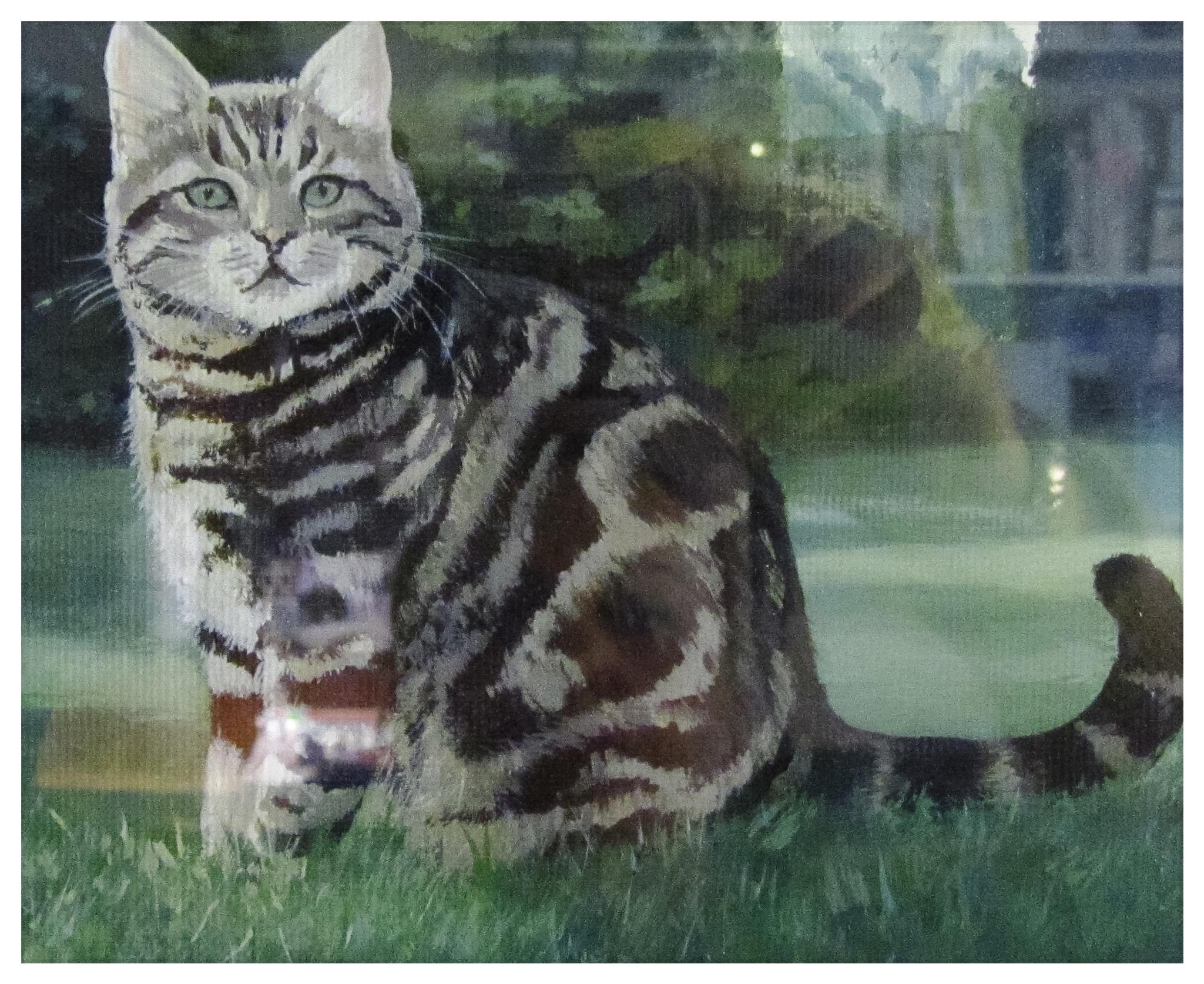 Kate Gabriel Ben cat pet portrait