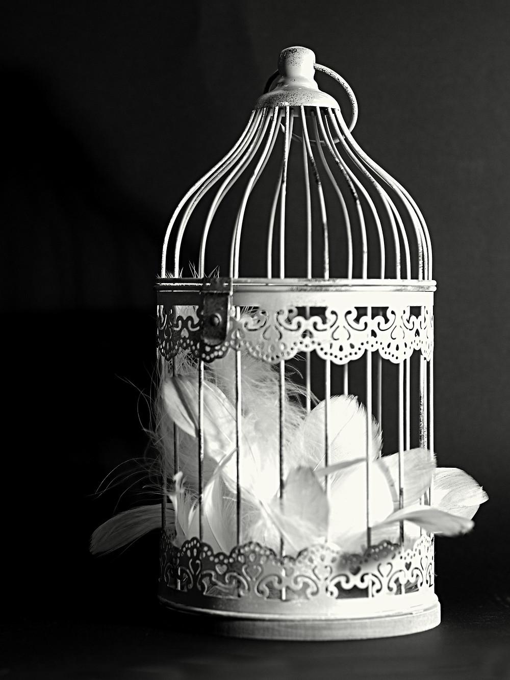 Cage of Feathers - Manolaya