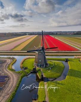 Classic Dutch