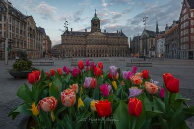 Dam Square - Tulipfestival 2021