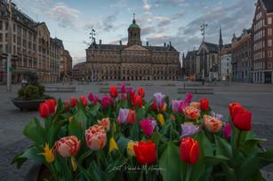 Dam Square Amsterdam - Tulipfestival 2021
