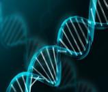 ADN reprogrammé par des mots, des sons, des fréquences