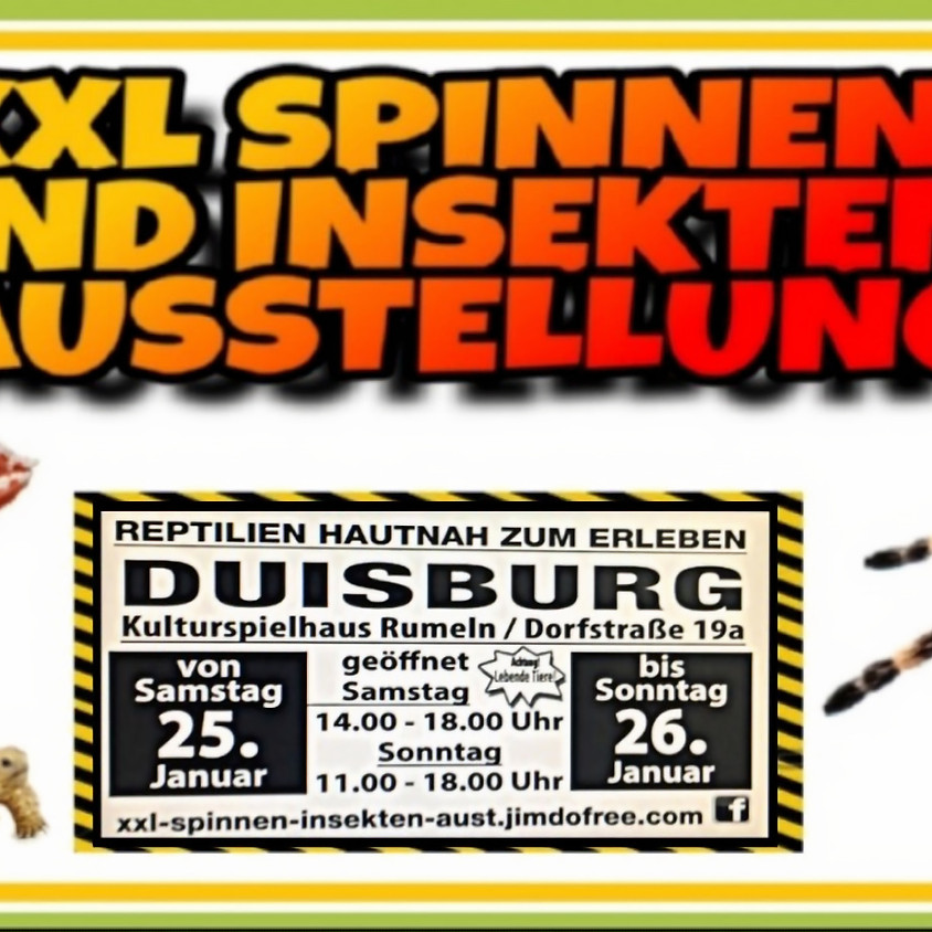 XXL Spinnen und Insekten Ausstellung