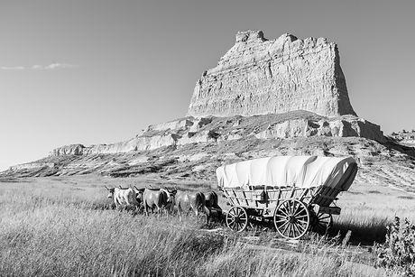 Oxen pull a Conestoga covered wagon on t