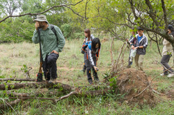 Inspecting tree damage by elephants with
