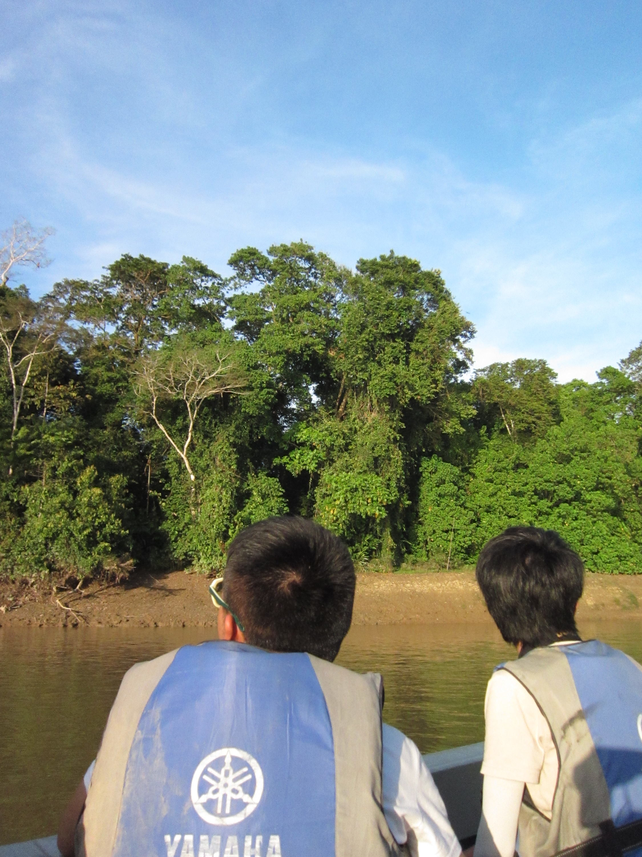 Observing monkey behaviour at the river of Kota Kinabatangan (Photo by Carmen Or)