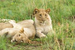 Animal Behaviour Field Course