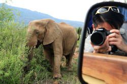 Nice way to selfie with African elephant (Photo by Stephen Chan)