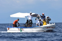 Students searching for dolphins