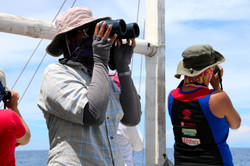 Searching for dolphins during line-trans