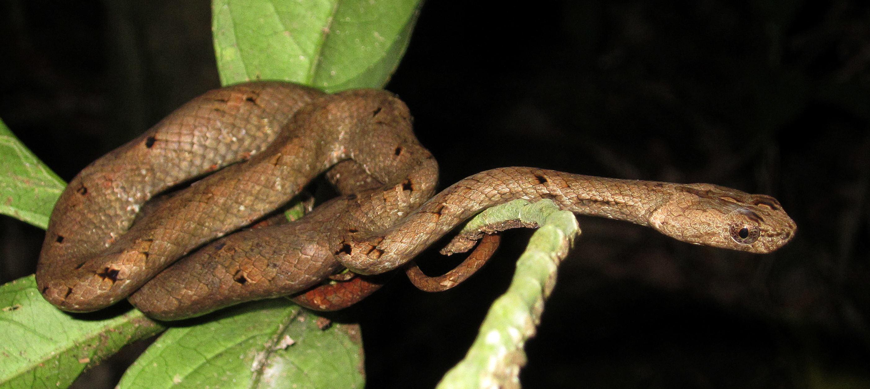 Snake during night safari (Photo by Carmen Or)