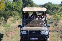 Students observating herbivore vigilance