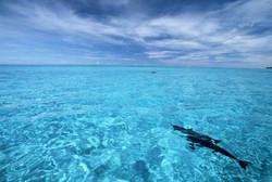 Lagoon+n+dolphin