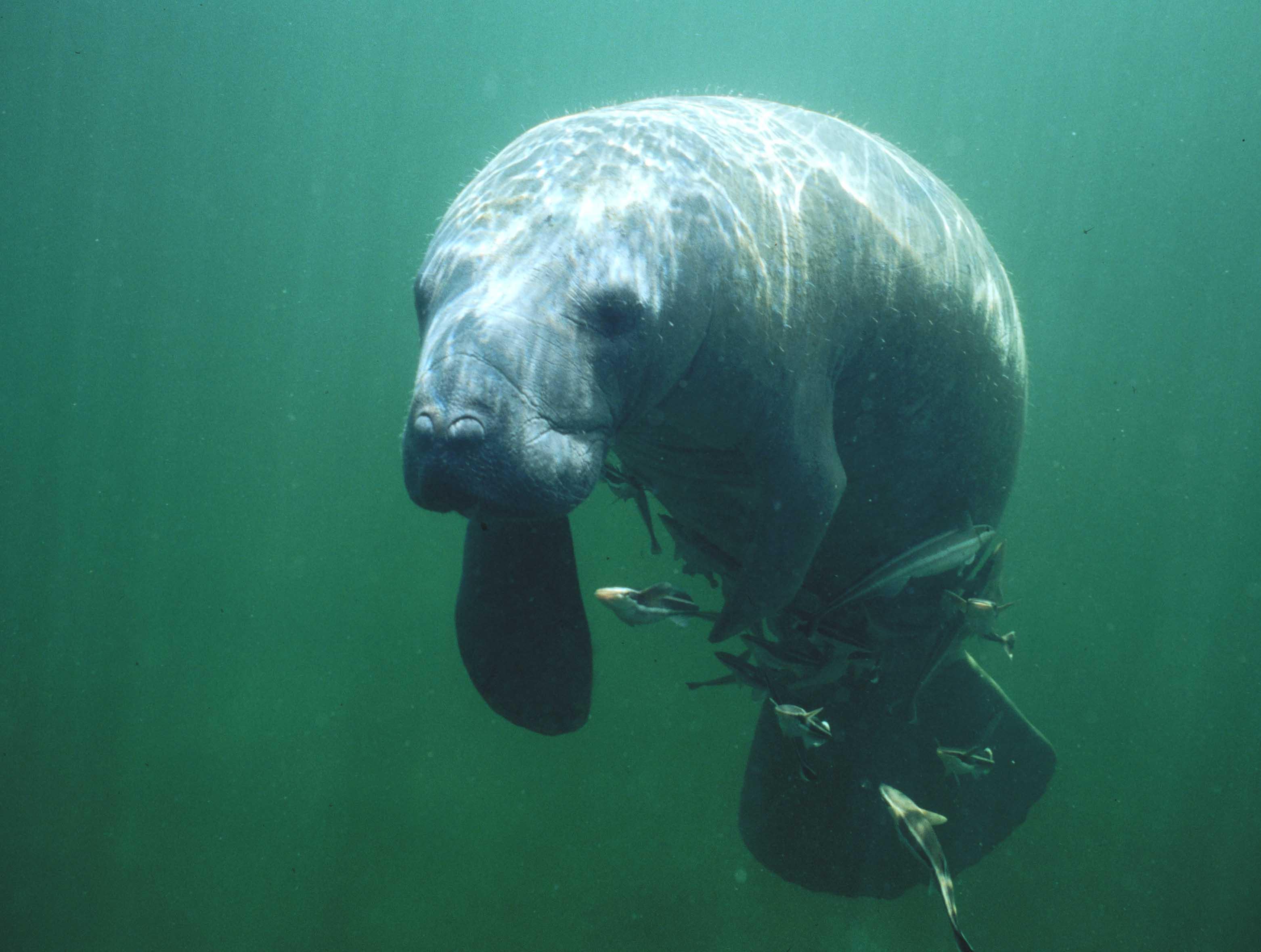 Marine Mammal Classroom Course
